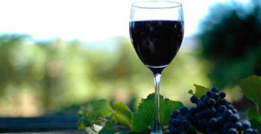 Wine Tasting Workshop