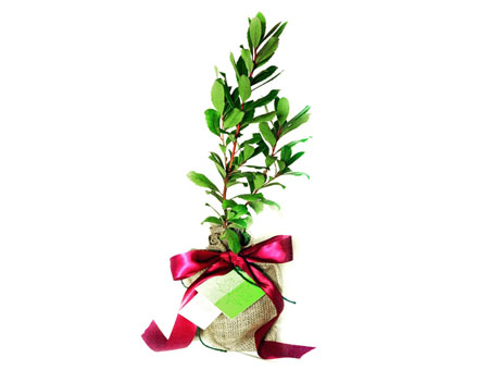 Gift Trees Home Garden Gifts Gift Ideas For Two