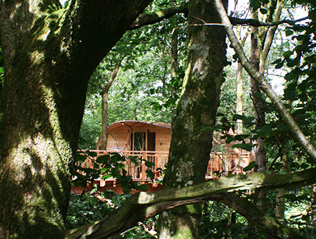 image of Three Night Tree House Escape for Two