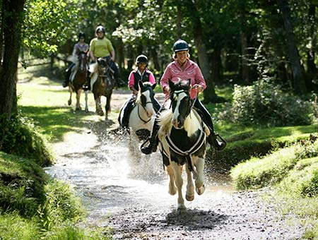 image of Western Horse Riding Break for Two