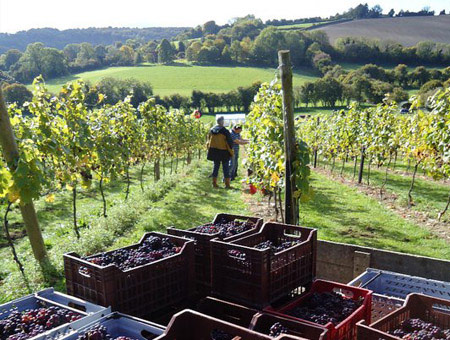 image of Daws Hill Vineyard Tour and Tasting for Four