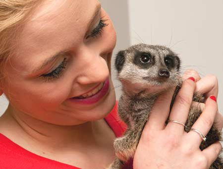 Meet the Meerkats for Two - 40th Birthday Experiences For Her